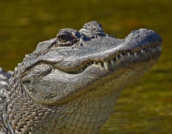 guy gator