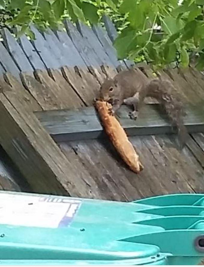 Introducing… Pizza Squirrel!