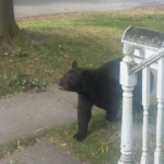 BEAR ON THE MOVE: Walmart Shoppers Report Seeing Bear