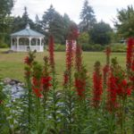 The Revival of North Tonawanda's Botanical Gardens