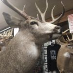 Hunting Season Safety Tips from the Niagara Outdoors Store