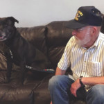 Niagara SPCA to Waive Adoption Fee for Veterans