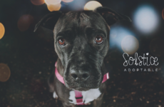 Single and Lovin' It: Niagara SPCA to Waive Adoption Fees for Dogs who Prefer to be the Only Pet