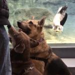 Niagara County SPCA Shelter Dogs Take Field Trip to Aquarium of Niagara