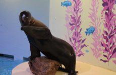 Aquarium of Niagara to Celebrate Girl Who Dedicated 6th Birthday to Fundraising for Animals