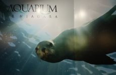 Aquarium of Niagara, a Must See Attraction, Continues to Upgrade Despite Pandemic