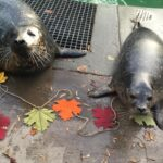 Aquarium of Niagara to Resume Fall Hours, COVID-19 Modified Programming