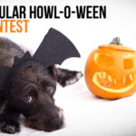 Spooktacular 'Howl-O-Ween' Photo Contest to Benefit Niagara County SPCA