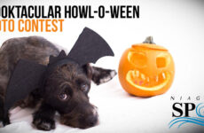 Spooktacular 'Howl-O-Ween' Photo Contest to Benefit Niagara County SPCA