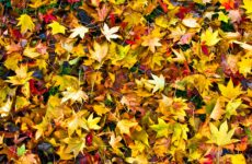Leaf Pick-Up Schedule Released for the City of Niagara Falls
