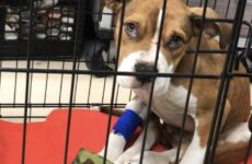 Niagara County SPCA Rescues Abused Puppy
